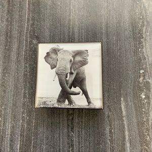 Chantecaille - Luminiscent Eye Shade - Elephant